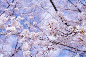 旬のはじまりー春ー
