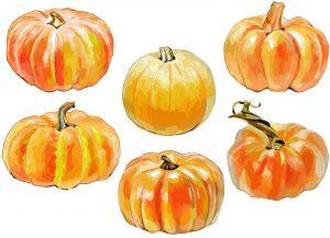 秋の味覚「かぼちゃ」